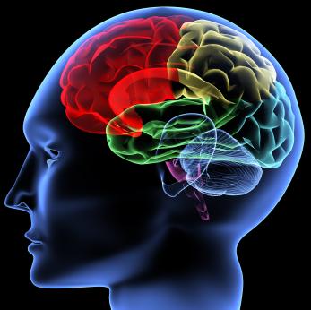 psych_brain1